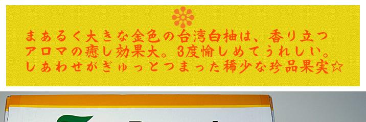 台湾白柚01