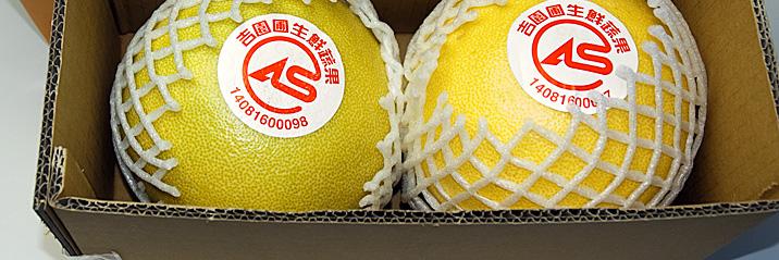 台湾白柚03