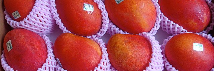 台湾アップルマンゴー02